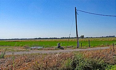 Ag land grown in rice; Pennington Road in Yuba City