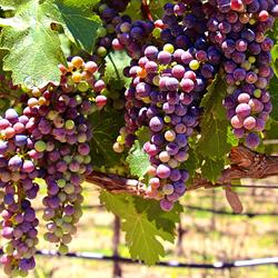 Spring Bud Break Wine Tour