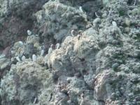 Fowlsheugh RSPB Reserve