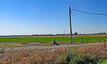 Ag land grown in rice; Pennington Road in Yuba City